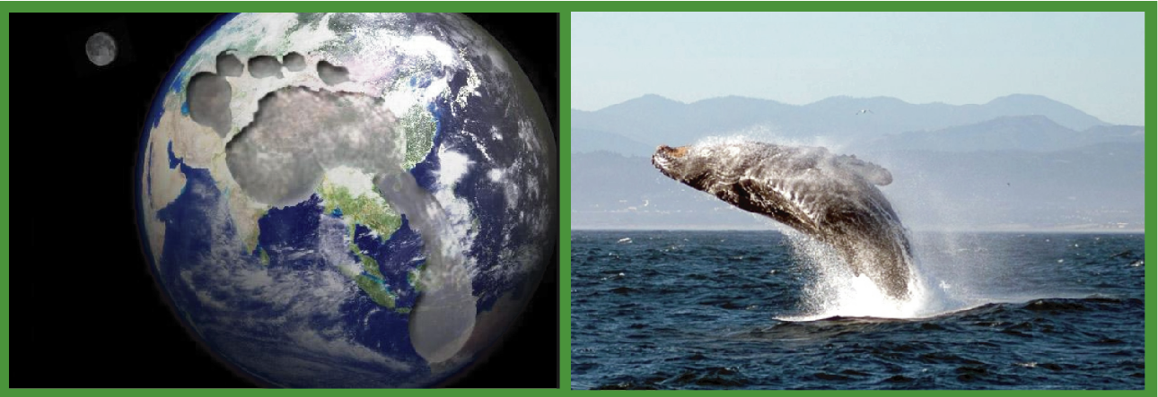 Earth and Whale